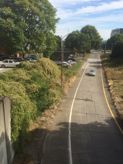 Looking east from the  overpass on Naito at the Clematis vitalba burying the bank and blackberries