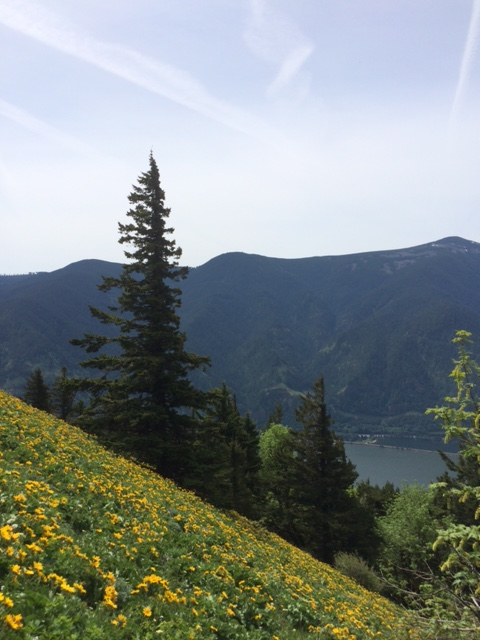 Dog Mountain's upper meadow with Balsam looking across the Columbia to Oregon.