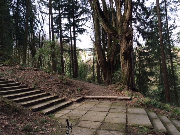 These stairs, within the Garden, are part of the same path that began near the Stearn's entrance.  This is the upper path that continues on and to the left just above W. Burnside.