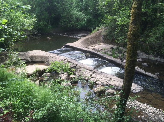 Errol Creek in SE Portland before it joins Johnson Creek its flow highly modified by us.