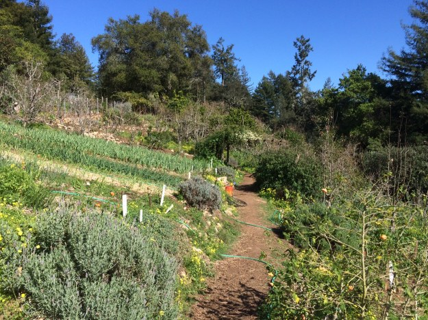This is the teaching garden of the UC at Santa Cruz's Agroecology program.  They also operate a farm on campus conducting research, providing internships and a variety of undergraduate and graduate progams as well community education and outreach.