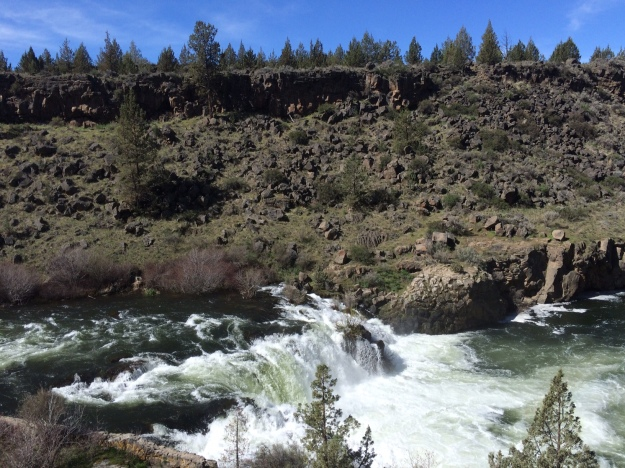 This is Steelhead Falls on the Deschutes River in Central Oregon.  This is a harsh environment as one would expect in a high desert environment.  A free running river along most of its length the benefits of its flow don't extend too far above the river's banks.  The roots of most plant are unlike to penetrate the basalt and tap into the river's flow so the landscape remains lean as does its thin sandy soil.