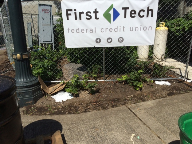 This bed was planted nearly to the sidewalk, here contains portable fencing, cables and electrical equipment, all placed by vendors to meet their needs...obviously not those of the plants, many of which have been obliterated. This was taken during the breakdown/ clean up after the Blues Fest.