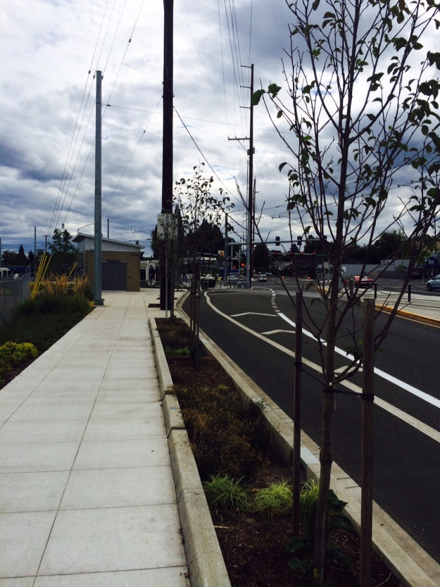 This curb planting approaching the intersection of 17th and Mcloughlin Blvd repeats the use of Magnolia 'Galaxy' where it will again be subject to inundation and reflected heat and light.