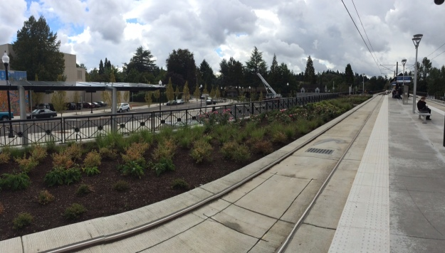 From the platform looking east. This is planted with xeric species.