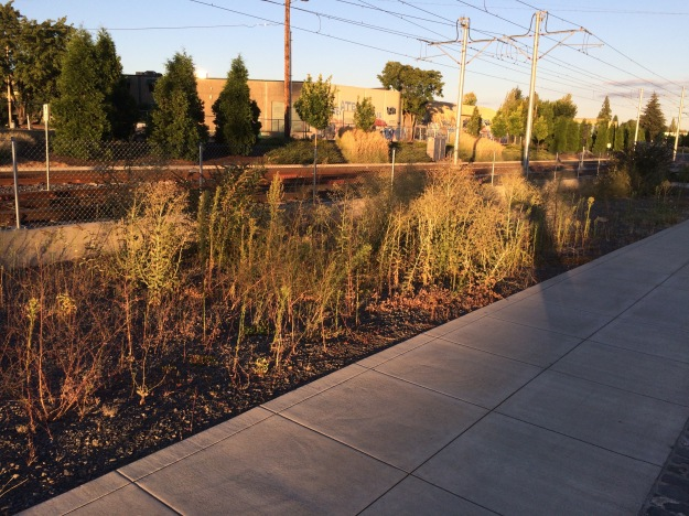 "This bed along Tri-Met's MAX Orange Line is 20'x200"" of gravel that has filled with weeds in less than a year since the line's opening. This landscape serves no obvious purpose other than as a space filler. It has not been treated with either pre-emergent or sterilant herbicides. Most of Tri-Met's landscapes are suffering similar decline though this one is worse than average. It demonstrates the problem with land owning agencies that do not understand landscapes or whose priorities do not recognize them."