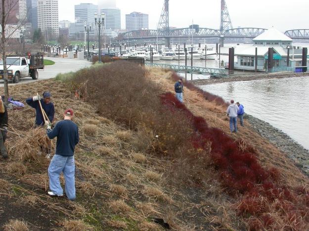 DSCN0185 South Waterfront grass harvest
