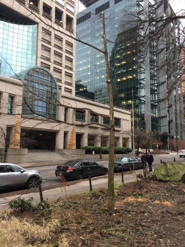 Across the street from the Justice Center is Chapman Square and this now decimated bed, the victim of a massive limb failure from high in a nearby Elm, something that mature Elms are prone to do here, though it can happen at anytime of year. It stripped several of the branches from the Gingko here.