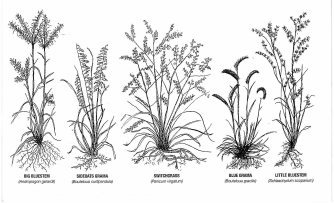 Grass Drawings