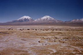 Volcanoes in Sajama National Park (Parinacota and Pomerape credit to Claire Pouteau Wikipedia