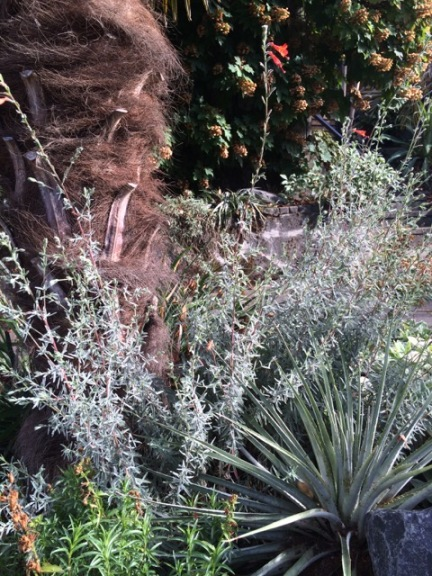 My Puya venusta, prior to death, planted amongst the basalt, Zauschneria 'Silver Select', Penstemon x mexicali and Trachycarpus