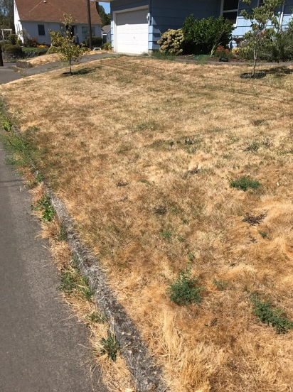 This lawn is actually in pretty good shape, the density isn't too bad yet, but the perennial weeds and warm season Crab Grass is gaining a foothold around all of the edges.