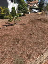 "An alternative 'lawn', these owners applied nearly 6"" of bark in hopes of smothering everything beneath it last year. This huge vacant area will require endless weeding and/or the regular application of post and pre-emergent herbicides."