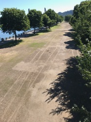 Looking south from the Morrison Bridge at Waterfront Park. This is probably the heaviest used park in the system. It is programed with big events from Cinqo de Mayo well into September, a political choice outside the control of Park maintenance staff. The turf collapses under the use looking much like this through much of the summer. Each event shuts down the irrigation during set-up, the event, take down and any necessary repairs. This combined with summer's heat makes it really difficult to bring the turf back.