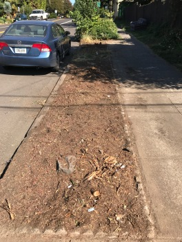 A closer neighbor of mine got uncharacteristically ambitious and removed 3 Juniperus sabina Tamariscifolia here that were encroaching on the sidewalk and inhibiting car access.