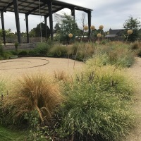 This decomposed granite spiral plaza sits amidst a large 'meadow' planting filled with a variety of bunching type grasses, Bouteloua gracilis 'Blonde Ambition' among them, a mix of perennials and bulbs like the old Onion inflorescences shown here. Meadow plantings are most visually effective when they have the chance to spread out, framed by the horizon or a clean border like the Ceanothus further to the right here.