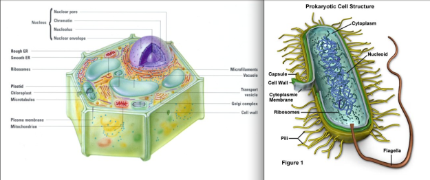 prokaryote_eukaryote_cells