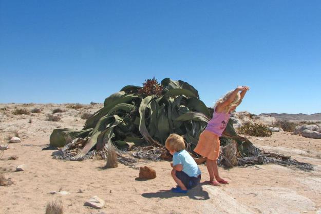 Welwitschia02