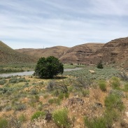 From the upland, short D and H Trail, you get a view of the Black Walnut Tree, left, and the Black Locust Tree, middle right, that were planted many years ago during the active ranching years. We didn't see anymore of these anywhere on Park property.