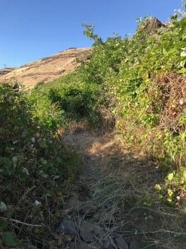If not for rough clearing, this portion of the trail would have been impassable, a problem that will get worse in years to come with current inadequate levels of maintenance.