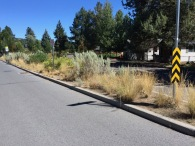 An entirely created Steppe landscape planted in a long narrow median in the street on the west side of Bend, OR. Steppe landscapes are biologically 'thin' in comparison to most of Earths other landscapes and biomes. They can be harsh with wide and rapid temperature swings, arid, they are only slightly wetter than a desert climate and as continentally influenced landscapes can get quite cold, that in Oregon averaging 0ºF to -10º and colder.