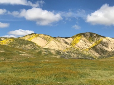 Close to the face of the Scarp. On this trip the north facing slopes were often covered in Goldfields.
