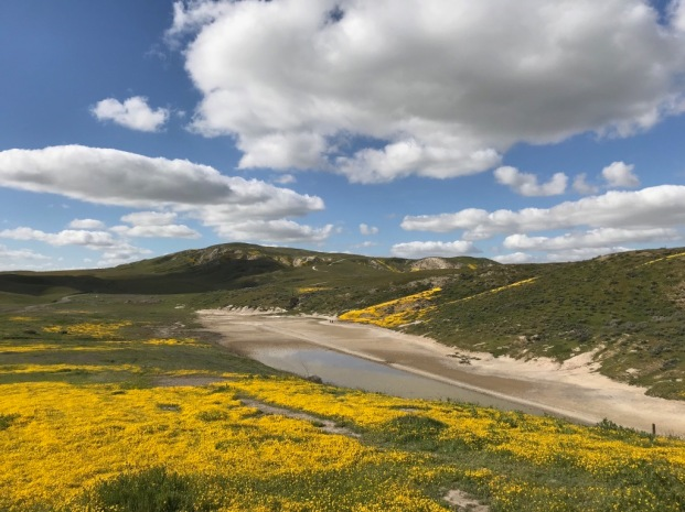 Goldfields, lake, south end of Soda Lake Rd., Carrizo Plain. The hills just beyond the 'pond' are where Elkhorn Rd. climbs up to the other, narrow, side of the Plain.