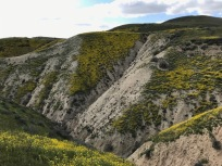 Looking down into one of the coutless ravines on the Initial climb from South Elkhorn Rd., Carrizo Plain