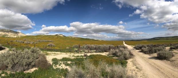 Saltbush, Ansinckia, road and sky....Elkhorn Rd., Carrizo Plain