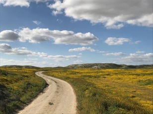 Love this road shot. Elkhorn Rd., Carrizo Plain