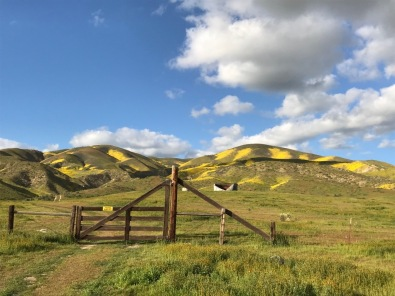 The fencing and gate like this one, is a reminder that cattle ranching still occurs here. Carrizo Plain, Elkhorn Rd.