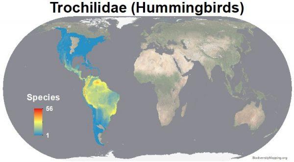 Birds_Trochilidae-600x330